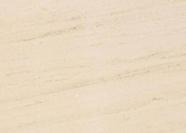 法国木化石